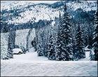 Snow-bound: The powder piles up near Revelstoke, B.C.