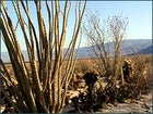 Anza-Borrego's raw desert beauty