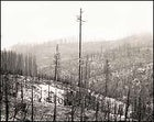 Looks bad, but it's natural: This area from 2001-02 fires in Montana and Oregon, will see an explosion of growth and returning wildlife in the years ahead.