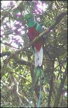 Panama, quetzal, conservation