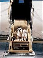 Dog adventure travel