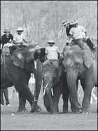 World Elephant Polo Championships