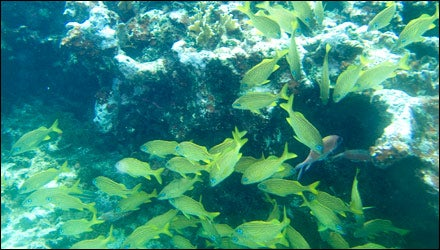 Andros Barrier Reef, Bahamas