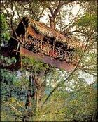 A notch above: a TourIndia Kerala tree house