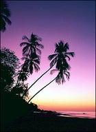 Tobago at sunset