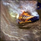 whitewater rafting shoes: Adidas Mali