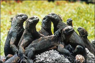 Yearbook pictures were never this good: inhabitants of the Galapagos ham for the camera and their A- outlook