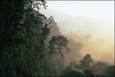 Keep your head in the clouds in Monteverde, Costa Rica