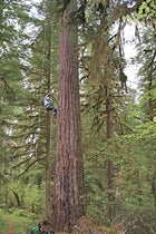 Oregon Tree Climbing