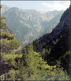 From the beginning of the trail in Xyloskalos, the Samaria Gorge drops 3,000 feet in less than two miles.