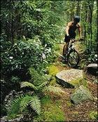 Singletrack of champions: mountain-biking the Davis Trail, near Davis