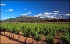 C'Est magnifique: the vineyards of Provence
