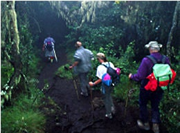 Oxygen zone: the forested lowlands of Kili