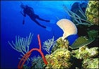 Into the Caribbean's clear blue wonders