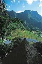 Scenes from Shangri-la: the rice terraces of the Philipinnes.