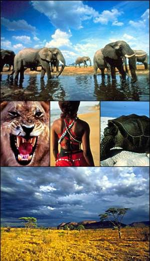Down at the old watering hole: African elephants in Chobe National Park, Botswana; Zambian lion, Senegalese beachwear, Aldabra giant tortoise; acacia trees in the Serengeti