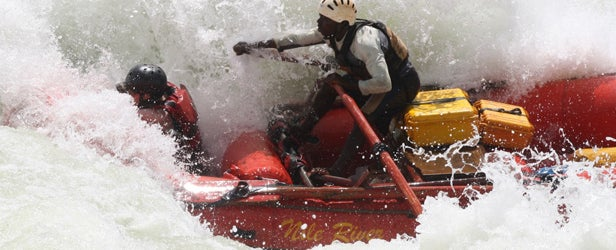 Silverback rapid on the Nile