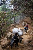 Hiking Nepal Tengboche Monastery