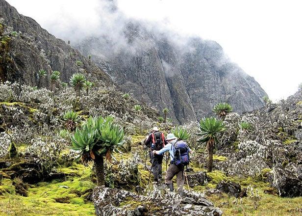 Mount Stanley Uganda