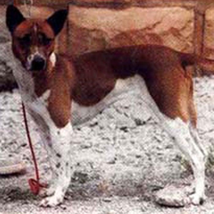 Telomian rarest dogs