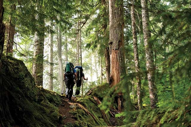 The Pacific Crest Trail in Washington
