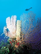 Give me five: reef life in the Bay Islands