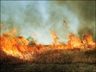 John Cain Carter: Conserving the Amazon