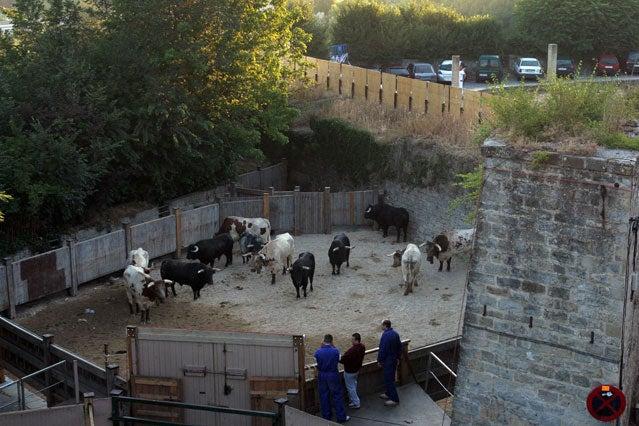 Before the bull run
