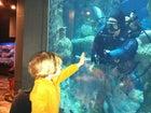 Outside the dive tank at the South Carolina Aquarium.