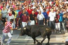 A lone bull on the streets of Cuéllar.