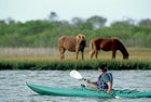 adult animals Assateague Island National Seas boater boating Delmarva Peninsula eating grazing horse kayak kayaker kayaking male mammal Maryland Mid-Atlantic North America one one person people pony recreation USA watercraft Wild horse Worcester County