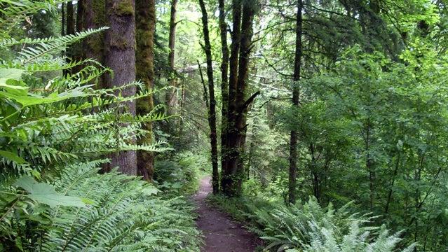 Wildwood Trail in June 2008.