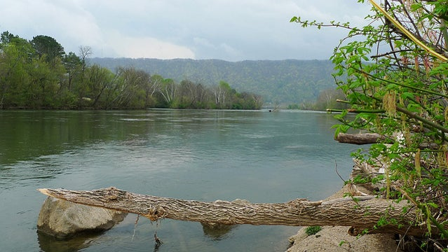 Holston River south fork.