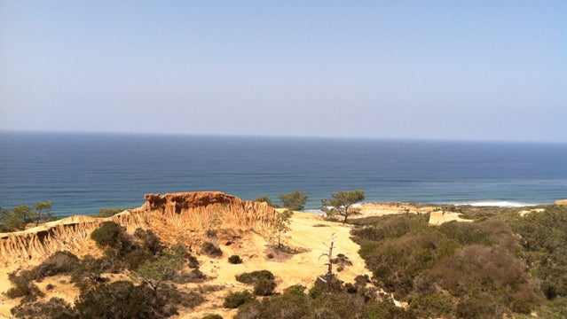 torrey pines state natural reserve madness is engulfing me beaches trees water san diego zoo san diego travel vacation