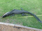The alligator that bit Joey Welch, after it was put down.