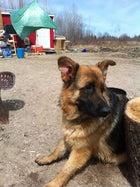 Joe's heroic canine, Ace.