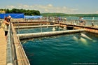 """A blogger posted a story about his visit to the """"Centre of Marine Mammal Adaptation, near Vladivostok, Russia, where Narnia is kept. He captured a photo of three small pools and 20 new young beluga whales in them."""
