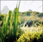 An elephant lurks outside a village in the reserve.