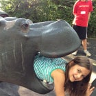 Hippo playground.