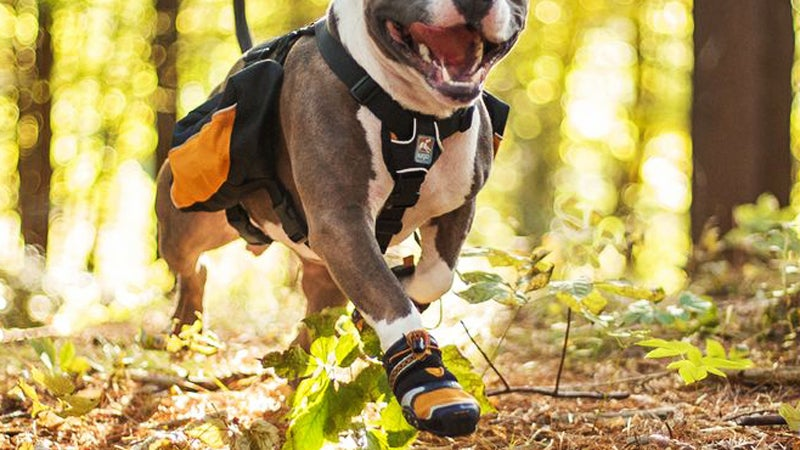 Kurgo Step and Strobe Dog Shoes kurgo paw protection outdoors outside magazine outside online hot-weather gear for dogs