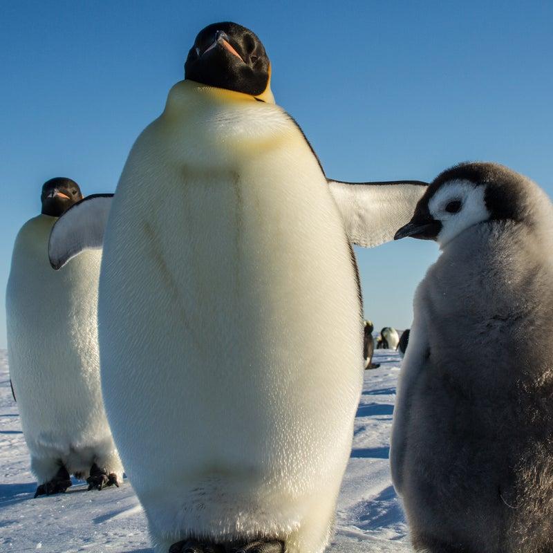 Eric Larsen Antarctica Adventure Penguins Ice Snow Global Warming