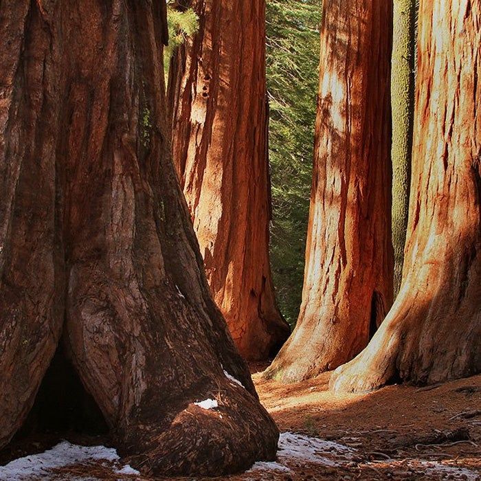 Best For: Feeling Small  Unique to California, the giant sequoias of Mariposa Grove are stunning in the rain and at their best in a light snow. Spring is perfect for spending quiet time alone with the largest trees on the planet.  The grove is partially responsible for Yosemite's conservation. President Theodore Roosevelt camped under the well-known Grizzly Giant with John Muir, just before a May snowstorm hit the park. Roosevelt created the national park not long after.  Among the old-growth redwoods, there are countless nooks and tunnels, as well as a covered bridge, to explore. Later, stop by the Pine Tree Market to pick up drinks, snacks, or hot chocolate.