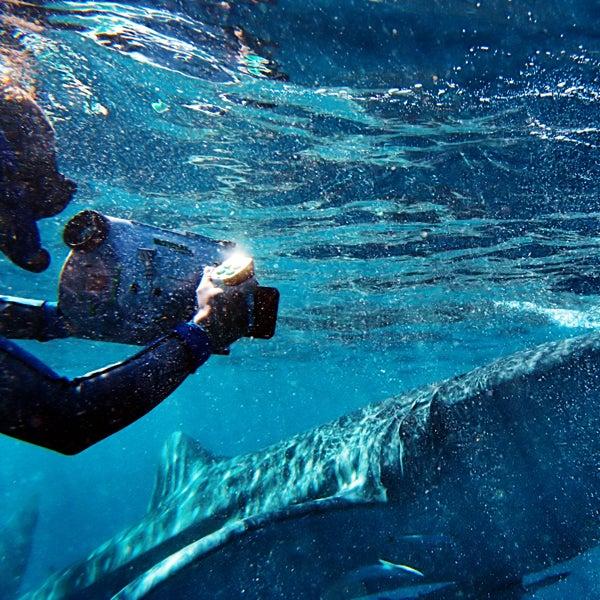 snorkel, mahe island, four seasons resort seychelles, whale sharks, swimming, adventure bucket list