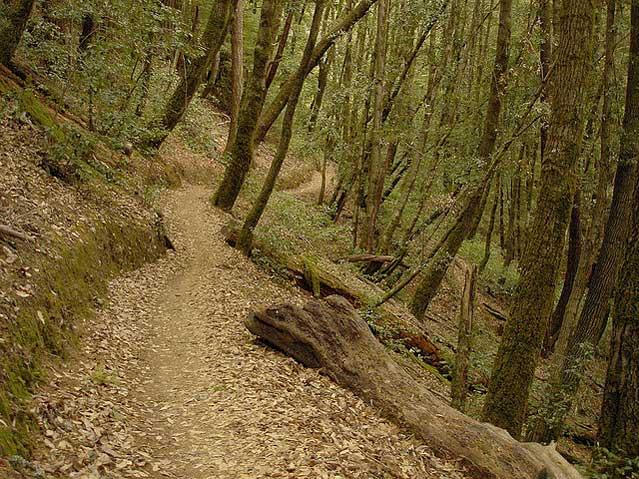california mountain biking riding san francisco