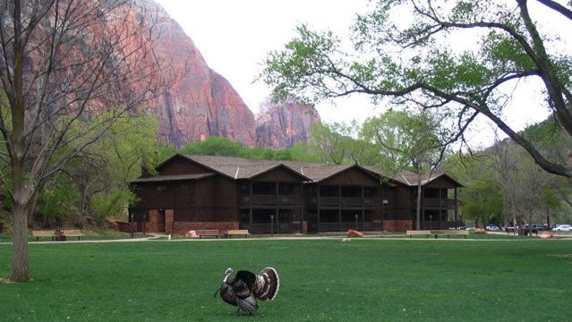 zion park utah zion lodge sustainable vacation green