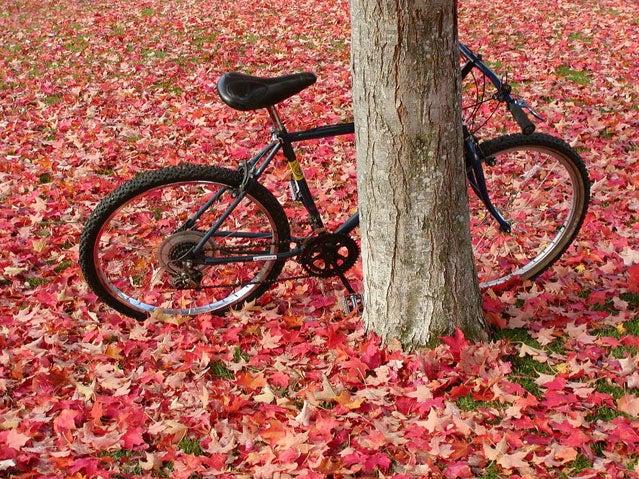 Autumn in Ashland Oregon