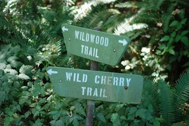 portland park wildwood trail