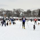 Some loppet races incorporate dogs.