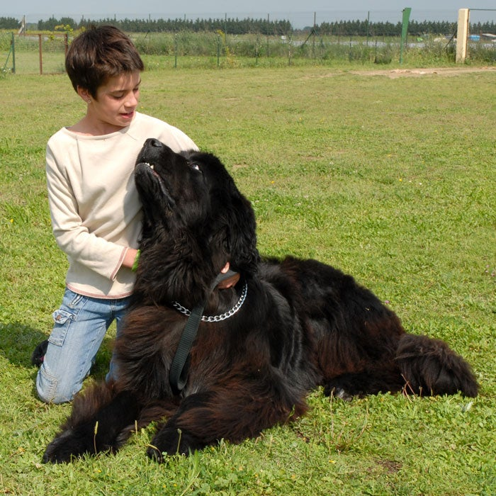 """Remember the pooch that took care of the kids in Peter Pan? Yup, Nana was a Newfoundland, said to be the best dogs for kid and often referred to as """"Nature's Nanny."""" These large dogs (110 to 160 pounds) are surprisingly good to have even if you live in a smaller house or apartment because the breed is very low energy. They are easy to train and very loyal, protective, and gentle, but drool plenty and have to be groomed regularly."""