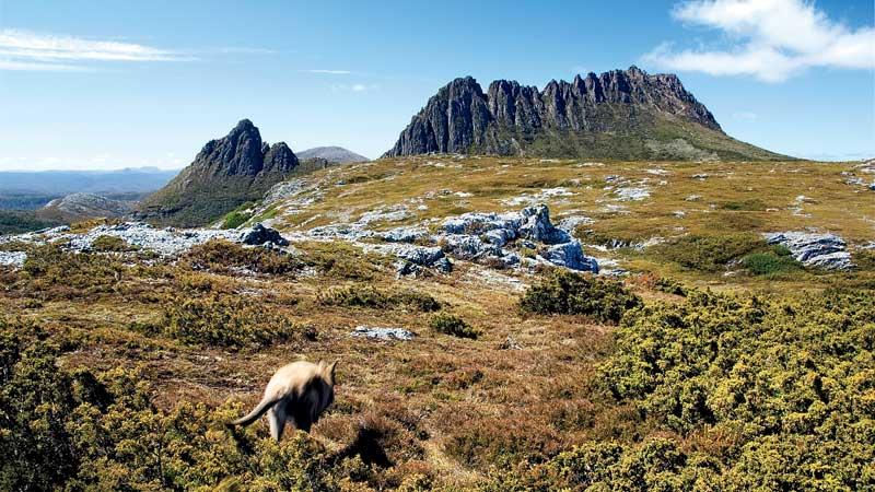 australia tasmania Cradle Mountain-Lake St. Claire
